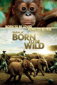 Film Born to Be Wild.