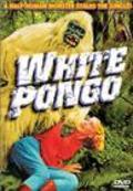White Pongo is the best movie in Egon Brecher filmography.