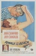 Female on the Beach is the best movie in Marjorie Bennett filmography.