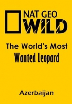 Film The World's Most Wanted Leopard (Azerbaijan).