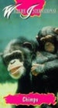 Chimps: So Like Us is the best movie in Jane Goodall filmography.
